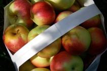 Apples 6