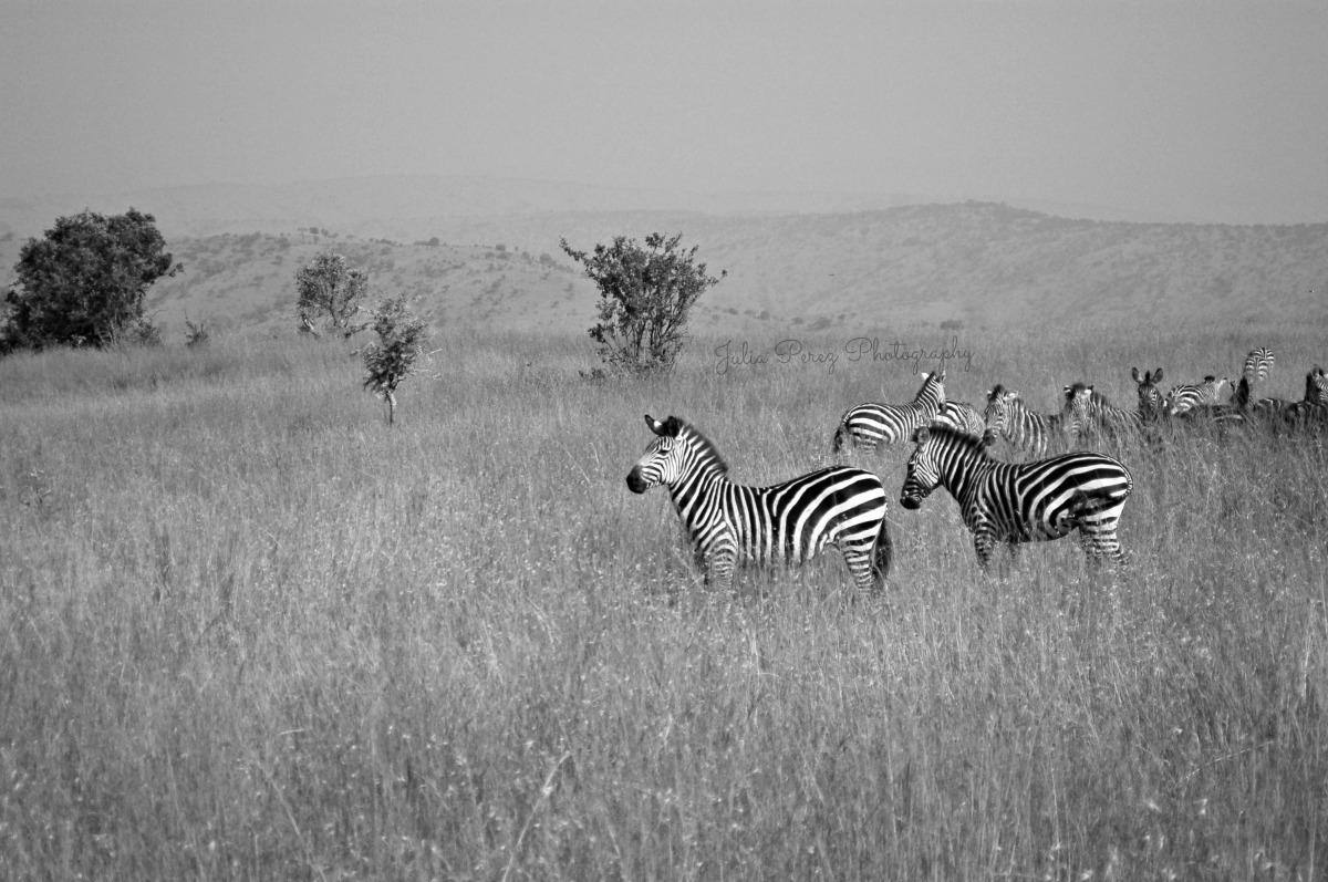When in Africa | Our FirstSafari
