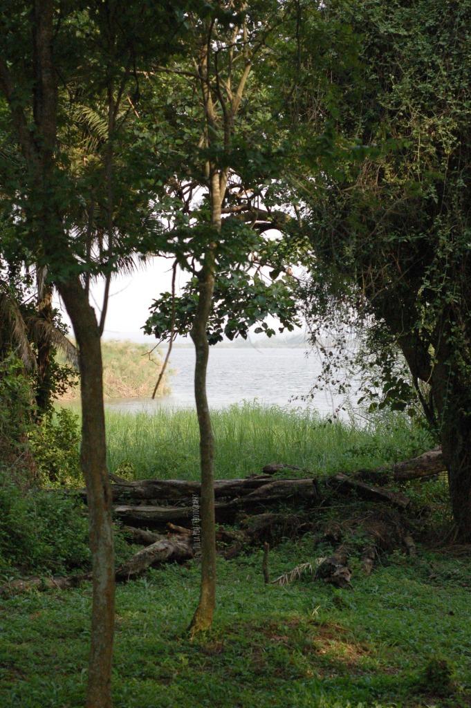 Akagera - Floating Papyrus_JPP