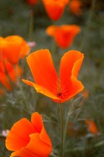 Flora of Roz Carr's Gardens 13