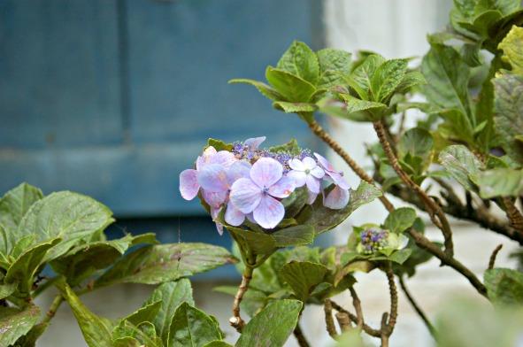 Flora of Roz Carr's Gardens 17
