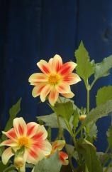 Flora of Roz Carr's Gardens 2