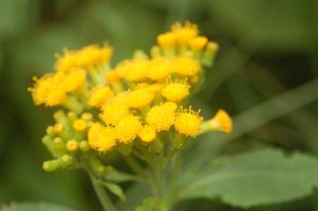 Flora of Roz Carr's Gardens 20