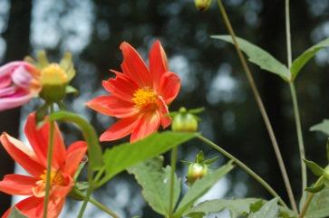 Flora of Roz Carr's Gardens 21