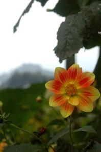 Flora of Roz Carr's Gardens 22