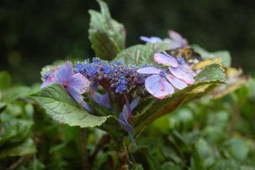 Flora of Roz Carr's Gardens 8