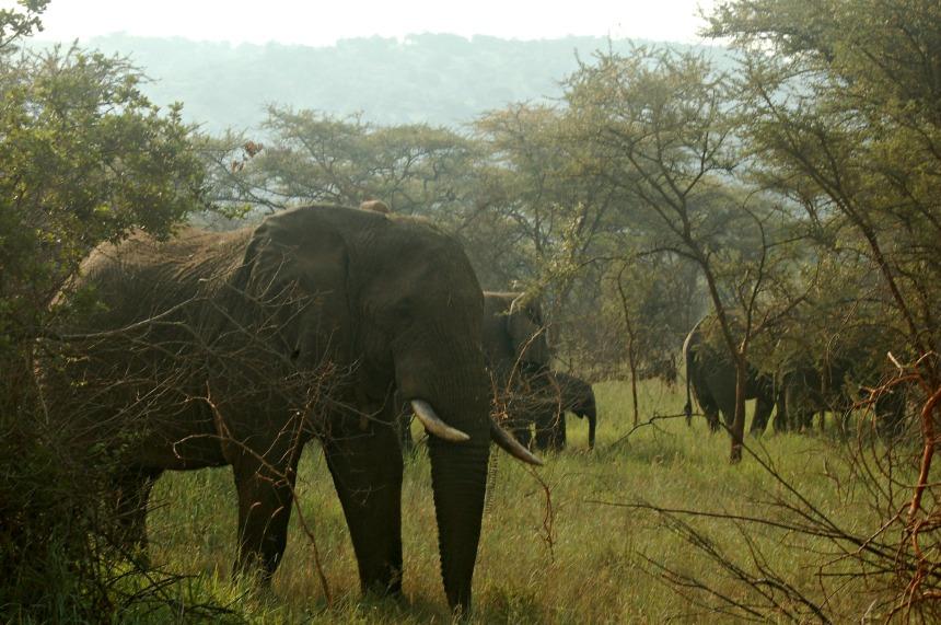 Akagera - Elephants_JPP