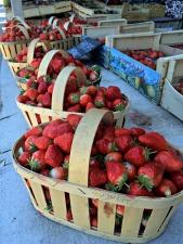 Avignon Produce Stand Strawberries