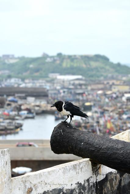 Elmina 7 JPP